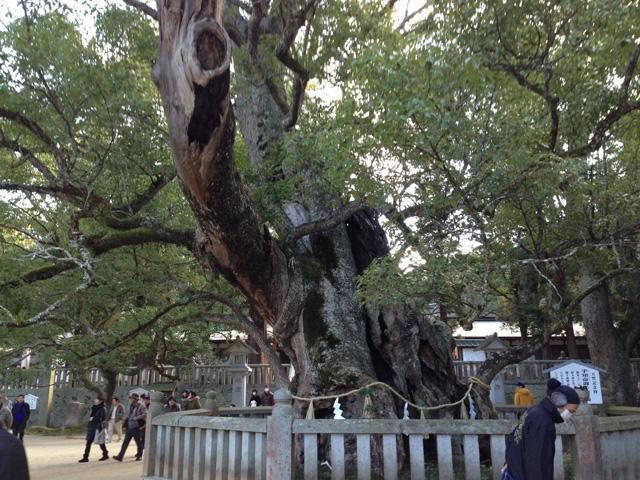 小千命お手植えの楠(樹齢2600年、大山祇神社)