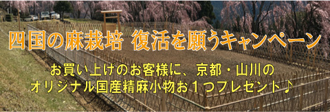 四国の麻栽培復活キャンペーン(お買い上げのお客様全員に極上国産精麻1本プレゼント♪)
