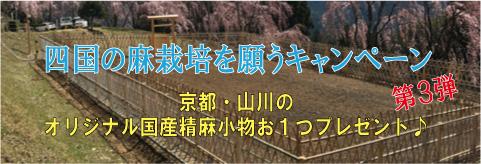 四国の麻栽培を願うキャンペーン(お買い上げ毎に京都・山川のオリジナル国産精麻小物お1つプレゼント♪)